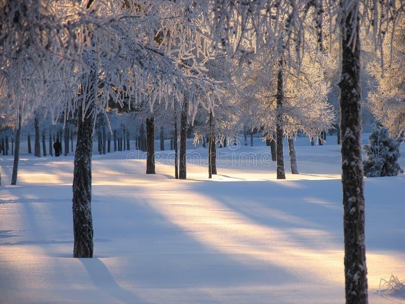 Bosque. Paisaje del invierno de la naturaleza. fotografía de archivo