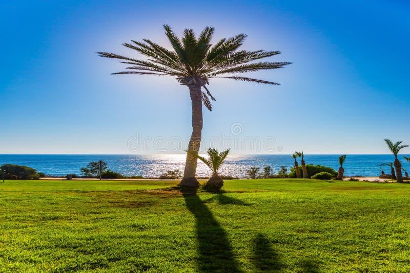 Bosque pitoresco da palma na praia imagens de stock