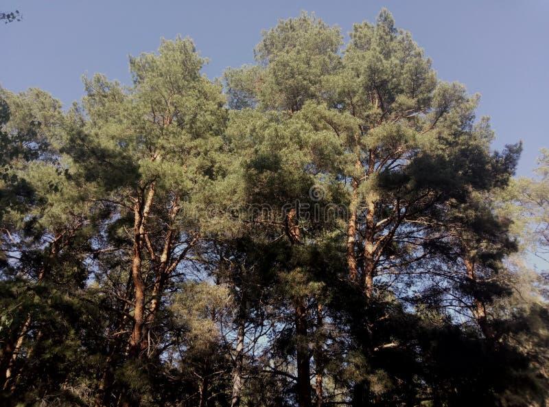 Bosque poderoso imagenes de archivo