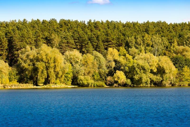 Bosque por el lago en el aire abierto fotos de archivo libres de regalías