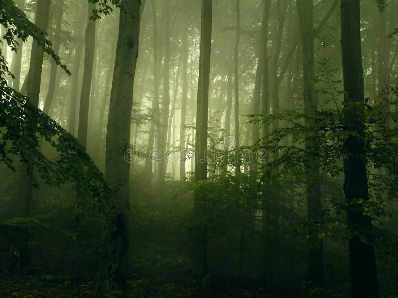 Bosque por la mañana imagenes de archivo