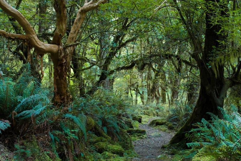 Bosque primitivo en pista del kepler fotografía de archivo