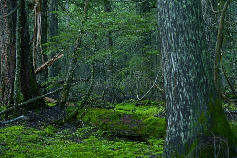 Bosque profundo de Montana imagenes de archivo
