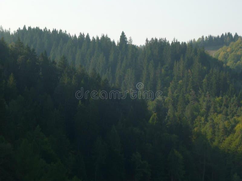 Bosque que sorprende en un día soleado imágenes de archivo libres de regalías