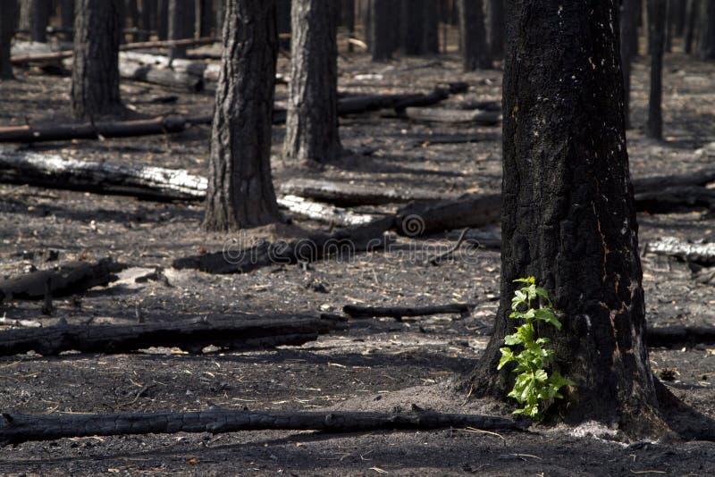 Bosque quemado fotos de archivo