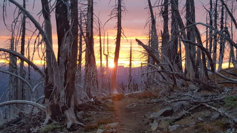 Bosque quemado en la puesta del sol foto de archivo libre de regalías