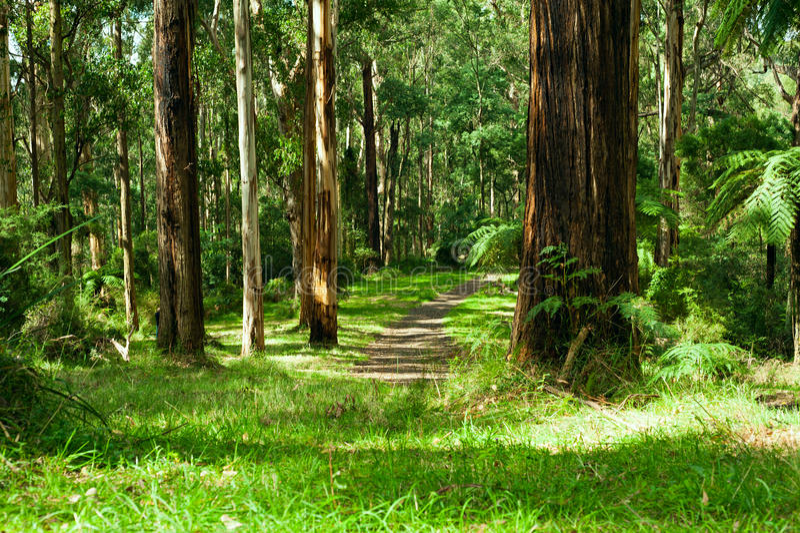 Bosque, rangos de Dandenong fotografía de archivo
