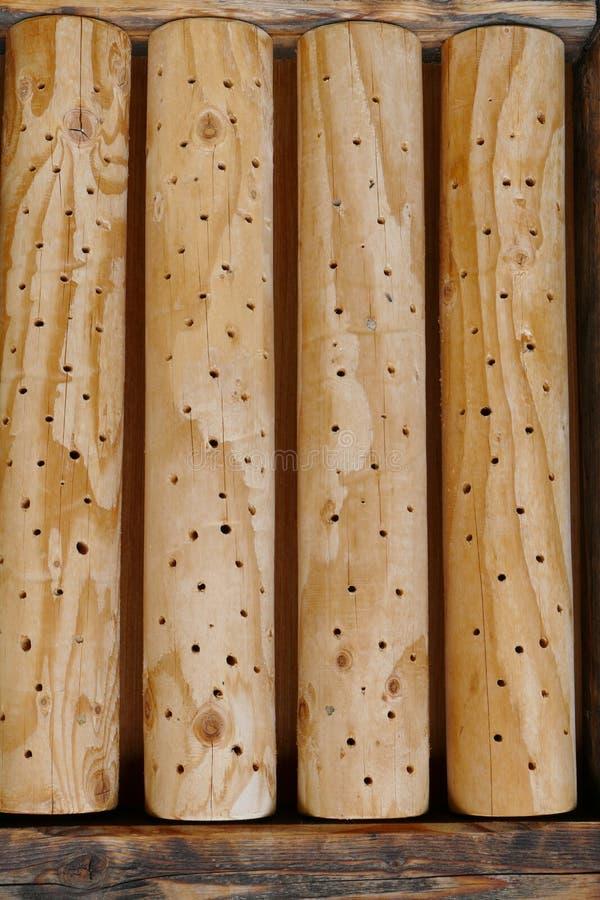 Bosque redondo para los insectos foto de archivo