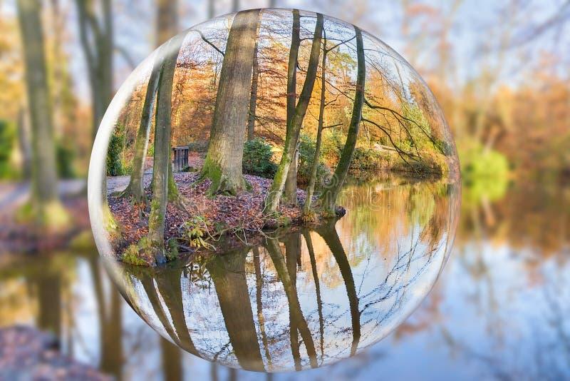 Bosque reflector del otoño de la bola de cristal con los troncos de árbol imágenes de archivo libres de regalías