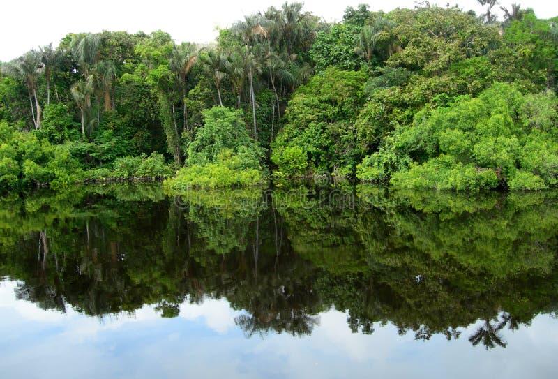 Bosque reflejado en una laguna en el Amazonas imagenes de archivo