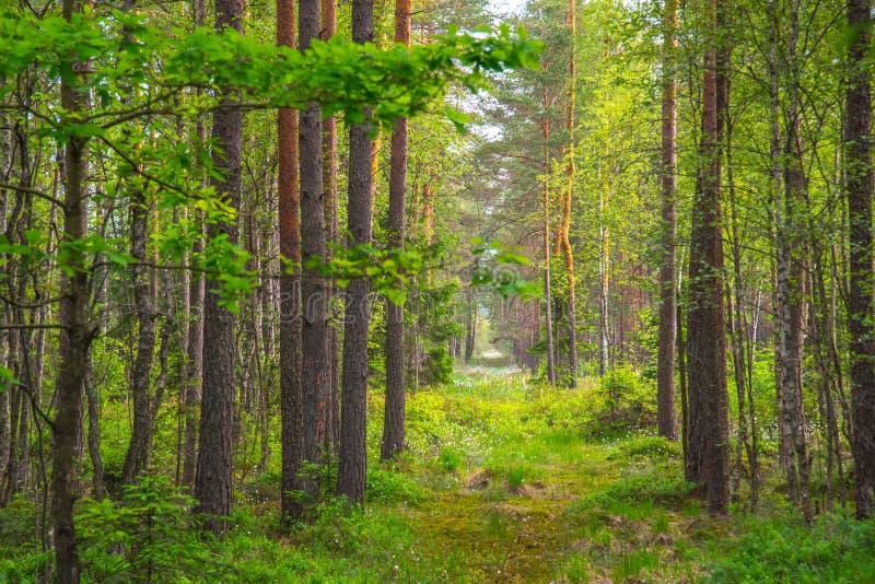 Bosque rico verde del pantano imagenes de archivo