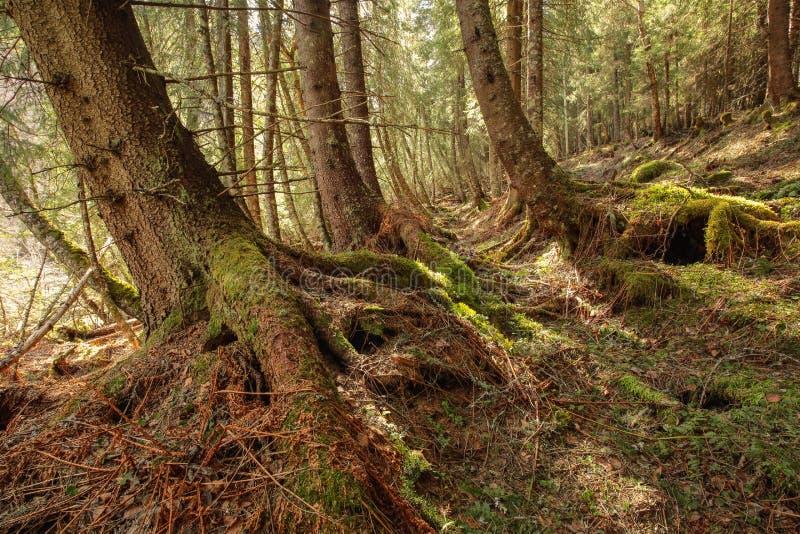 Bosque salvaje en Noruega foto de archivo