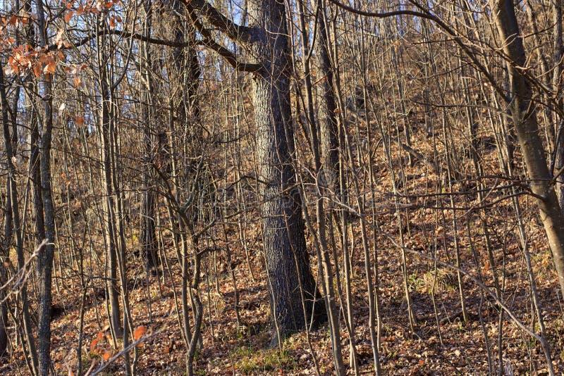 Bosque seco fotos de archivo