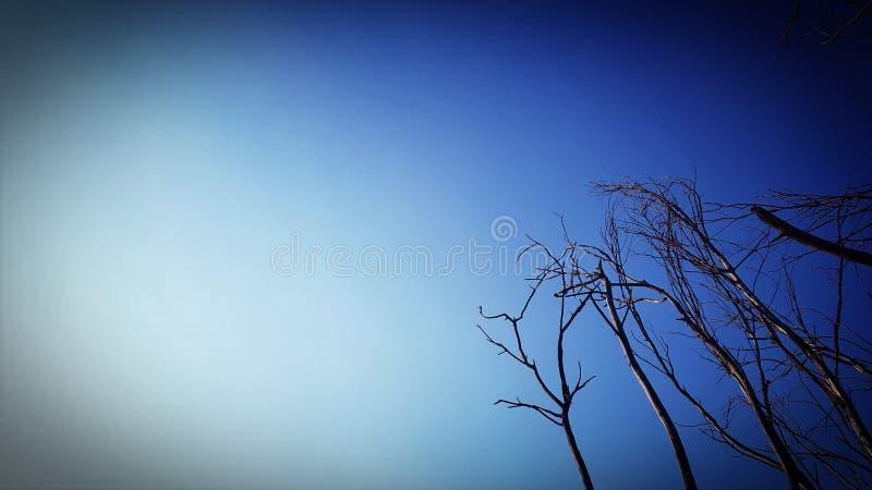 Bosque seco del cielo azul imagenes de archivo
