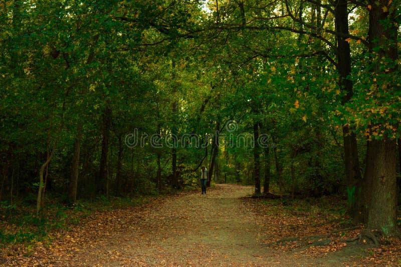 Bosque silencioso imágenes de archivo libres de regalías