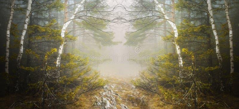 Bosque simétrico y niebla misteriosa imágenes de archivo libres de regalías