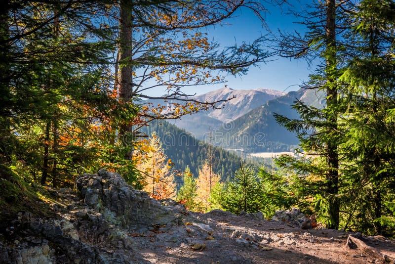 Bosque soleado en las montañas en la salida del sol, Polonia de Tatra imagen de archivo
