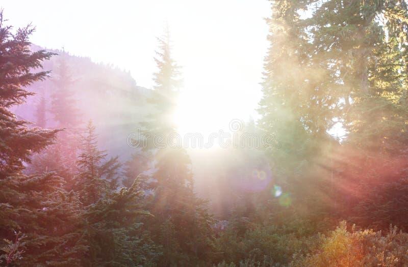 Bosque soleado fotos de archivo