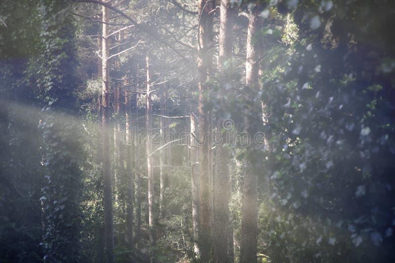 Bosque soleado y del foogy imágenes de archivo libres de regalías