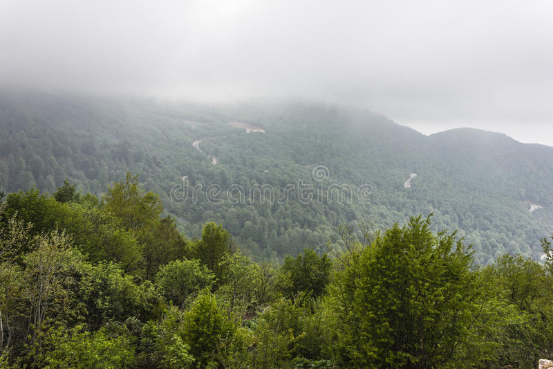 Bosque Spruce imagen de archivo