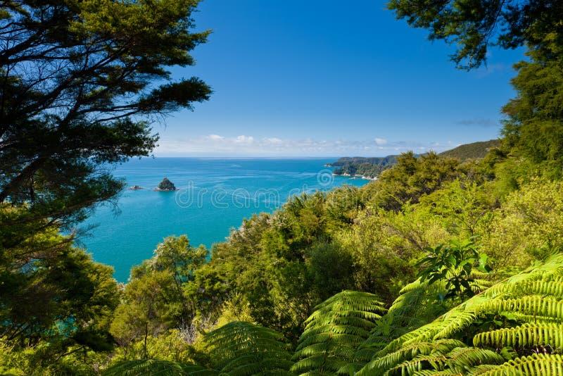 Bosque subtropical de Abel Tasman NP, Nueva Zelandia imágenes de archivo libres de regalías
