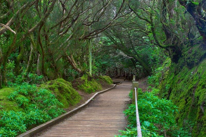 Bosque subtropical en Tenerife, islas Canarias, España fotografía de archivo