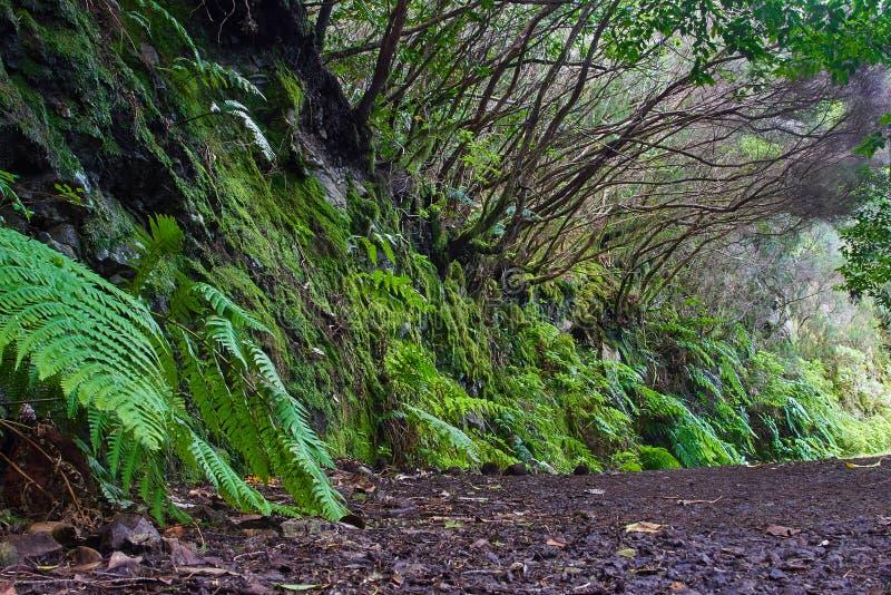 Bosque subtropical en Tenerife, islas Canarias, España fotos de archivo libres de regalías