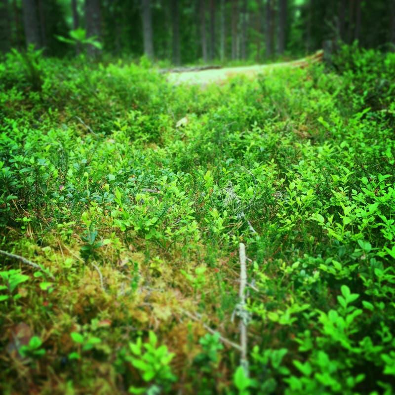 Bosque sueco imágenes de archivo libres de regalías