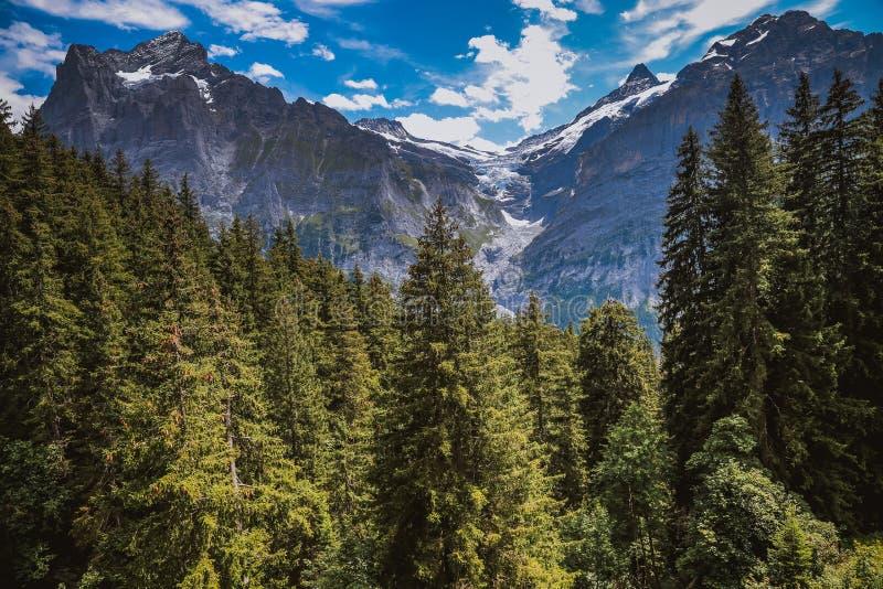 Bosque suizo en el verano fotografía de archivo