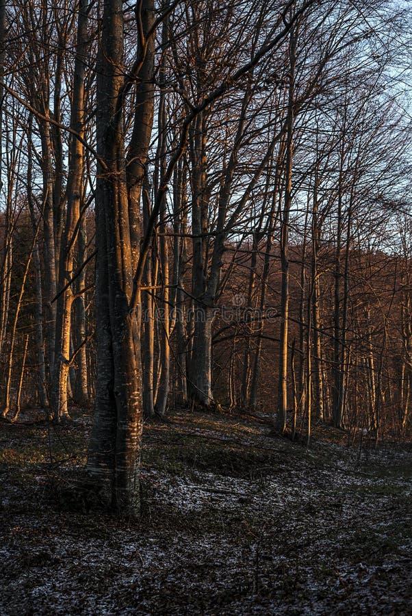 Bosque temprano por la mañana encendida por el sol fotos de archivo