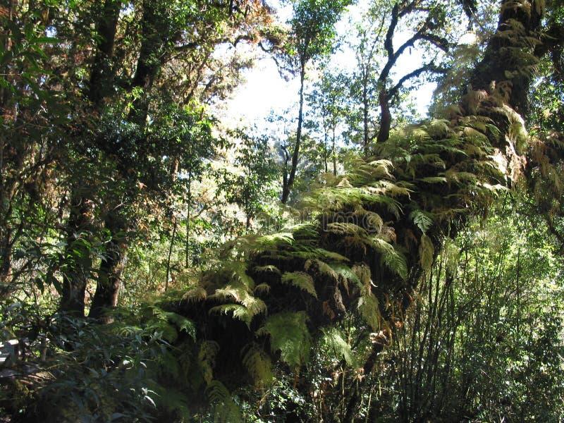 Bosque tropical foto de archivo