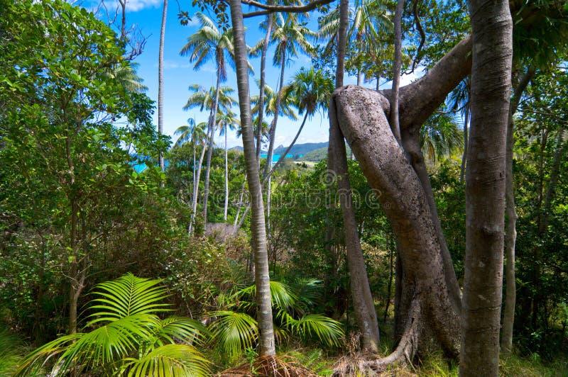 Bosque tropical foto de archivo libre de regalías