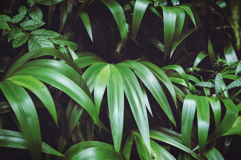 Bosque tropical admitido entonado oscuro de la imagen de fondo de las hojas grandes imagen de archivo libre de regalías