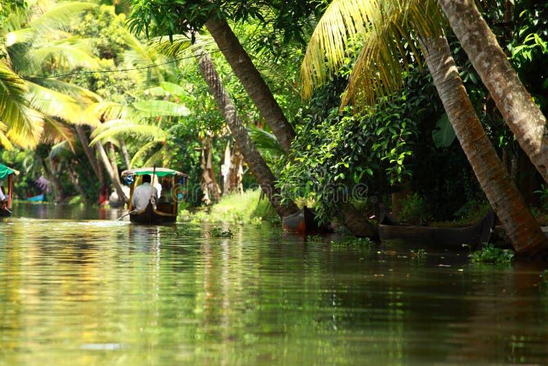 Bosque tropical de la palmera en el remanso de Kochin, Kerala, la India fotografía de archivo libre de regalías