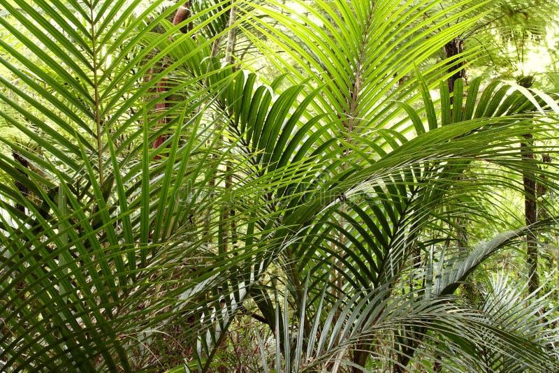 Bosque tropical de la selva foto de archivo
