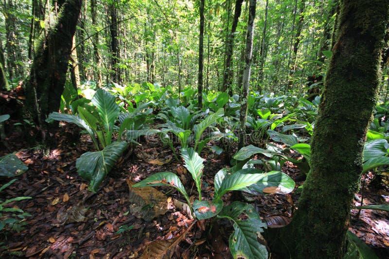Bosque tropical en el parque nacional de Canaima, Venezuela fotografía de archivo libre de regalías