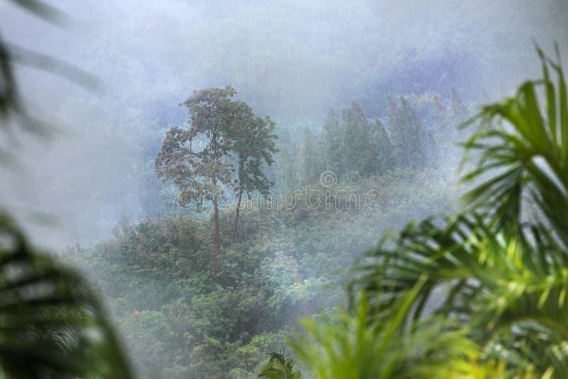 Bosque tropical en niebla de la lluvia y de la niebla imagenes de archivo