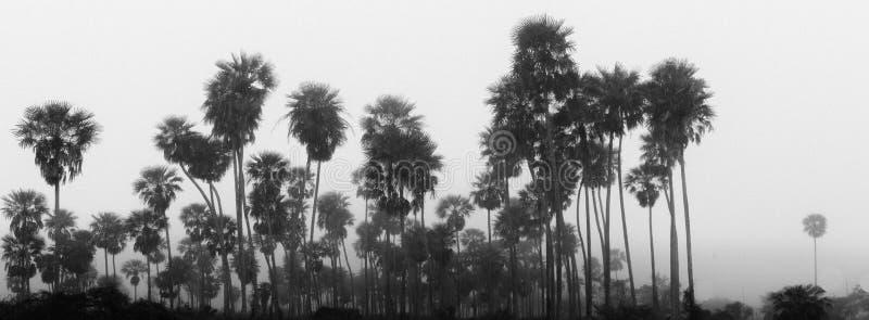 Bosque tropical en una niebla imagenes de archivo