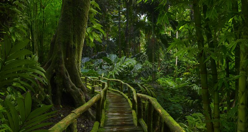 Bosque tropical profundo con el bambú imágenes de archivo libres de regalías