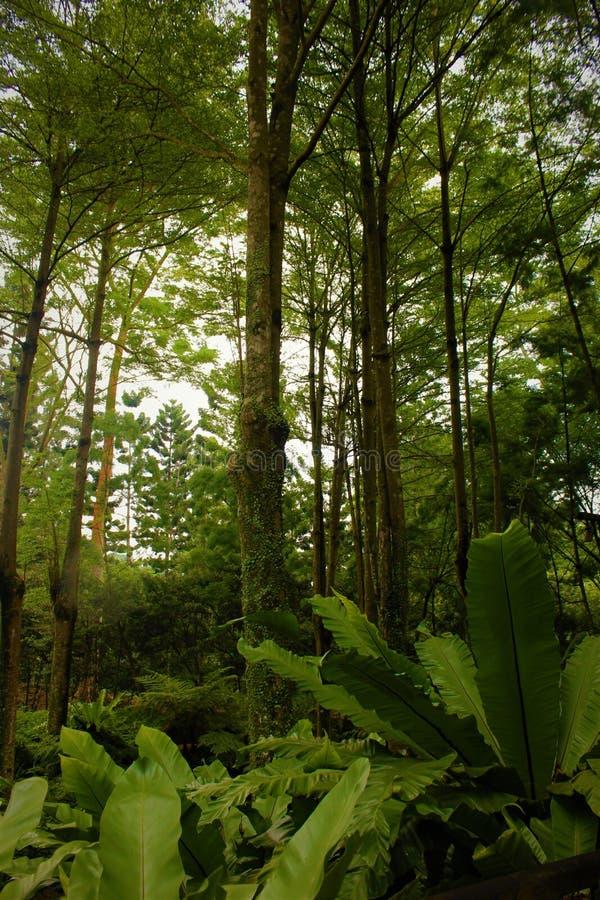 Bosque tropical verde denso y enorme fotografía de archivo