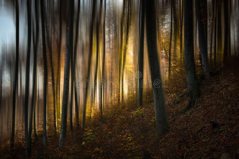 Bosque V del cuento foto de archivo libre de regalías