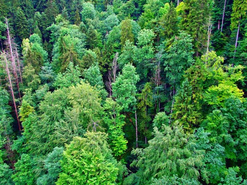 bosque, verde, árbol, naturaleza, árboles, paisaje, planta, cielo, verano, bosque, montaña, madera, hoja, hojas, pino, hierba, co imagen de archivo
