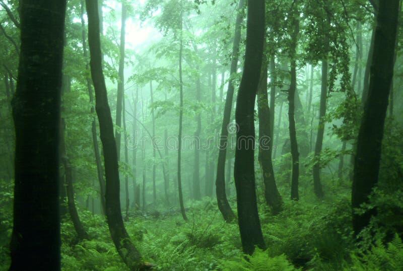 Bosque verde foto de archivo libre de regalías