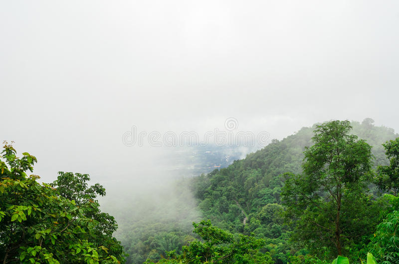 Bosque verde con de niebla en la estación de lluvias foto de archivo libre de regalías