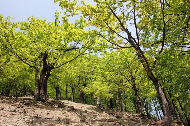 Bosque verde de la primavera en rayos del sol imagen de archivo libre de regalías