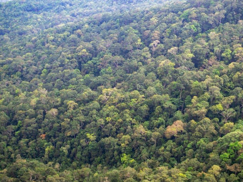 Bosque verde de una altura fotos de archivo