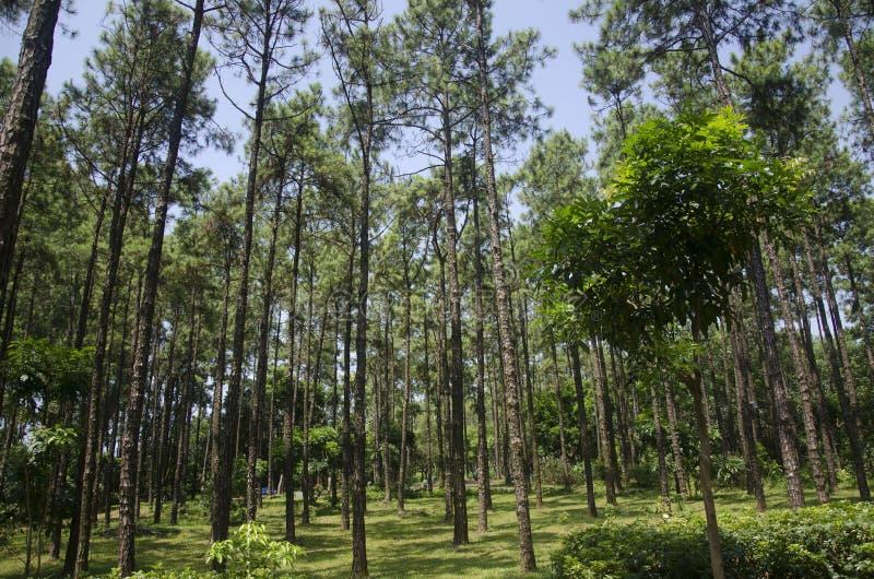Bosque verde debajo del cielo azul fotografía de archivo libre de regalías