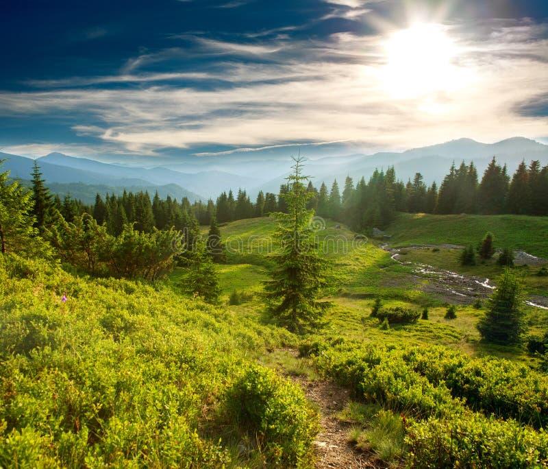 Bosque verde del pino en montañas en el fondo del cielo de la puesta del sol foto de archivo