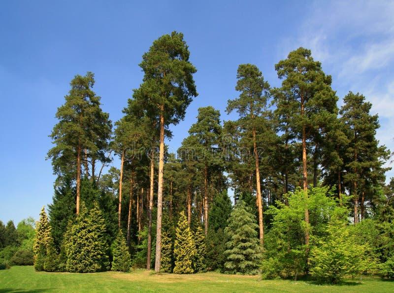 Bosque verde el el resorte imágenes de archivo libres de regalías