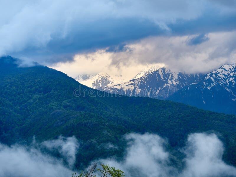 Bosque verde en el fondo de altas montañas nevosas fotografía de archivo